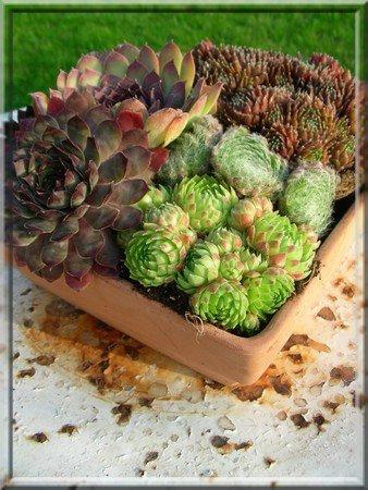 Les plantes grasses sont des fleurs d 39 entretien facile blog de leonor974 - Plantes grasses entretien ...