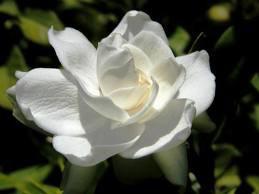 Signification De La Couleur Blanche Des Fleurs